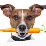 raw-dog-diet